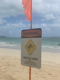 Man of War spotted!